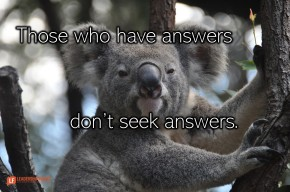 Image of a complacent koala bear in a tree.