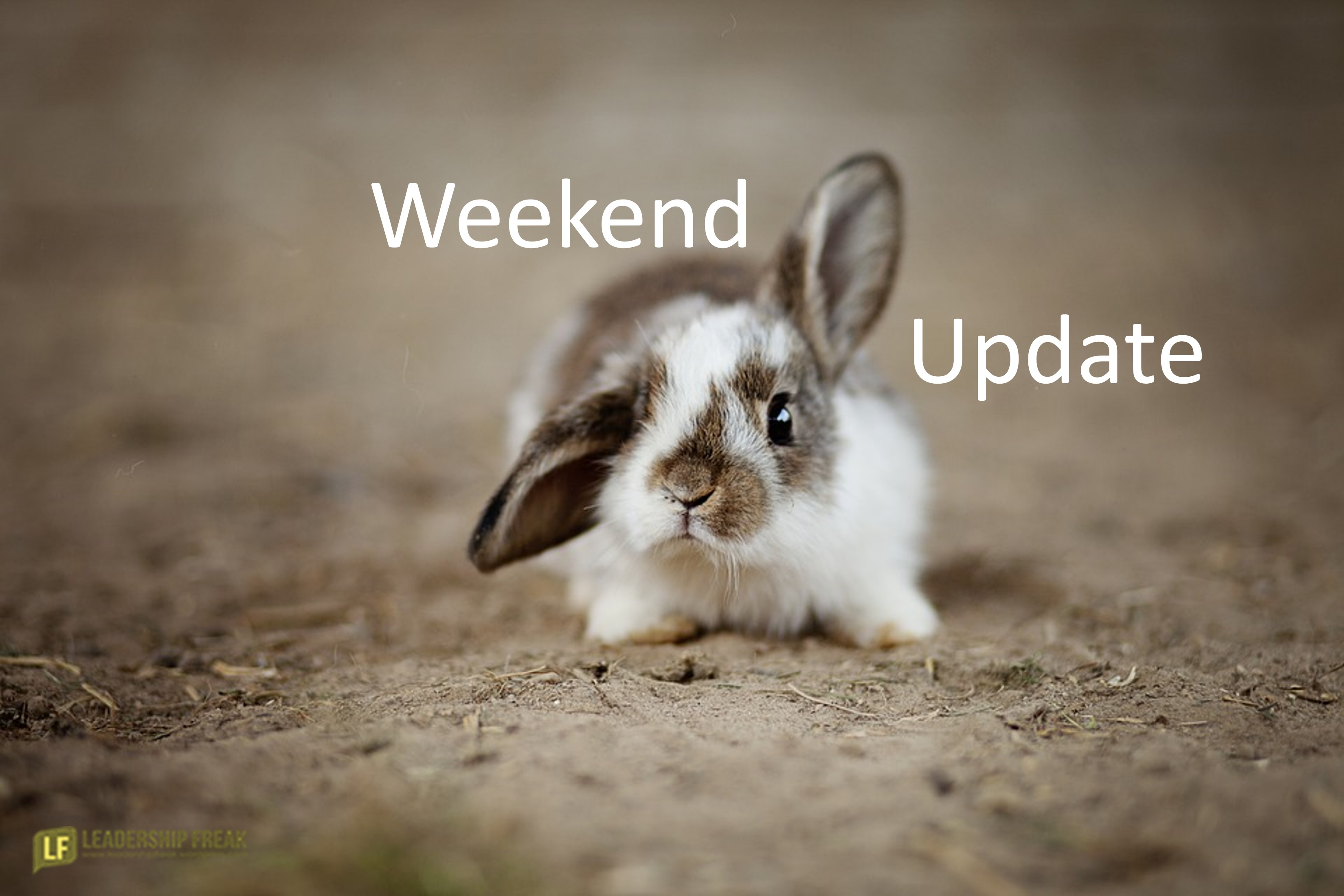 Bunny with one ear sticking up.  Weekend Update