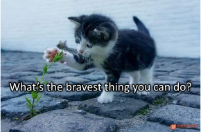 Image of a kitten playing with a flower