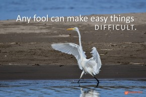Image of a heron walking with outstretched wings.