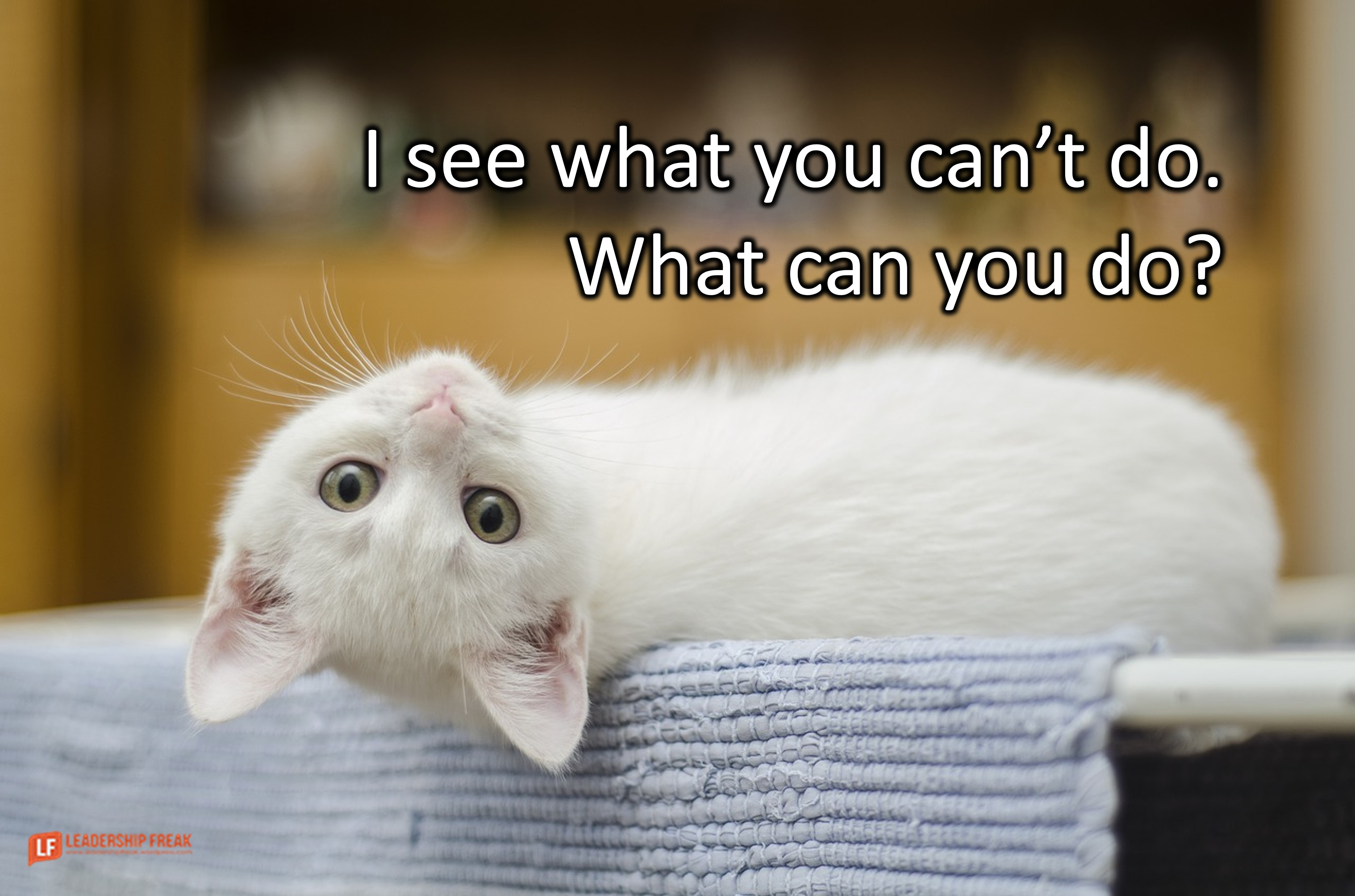 White cat looking at you with his head turned upside down.  I see what you can't do. What can you do?
