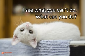 Image of a white cat looking at you with his head turned upside down.