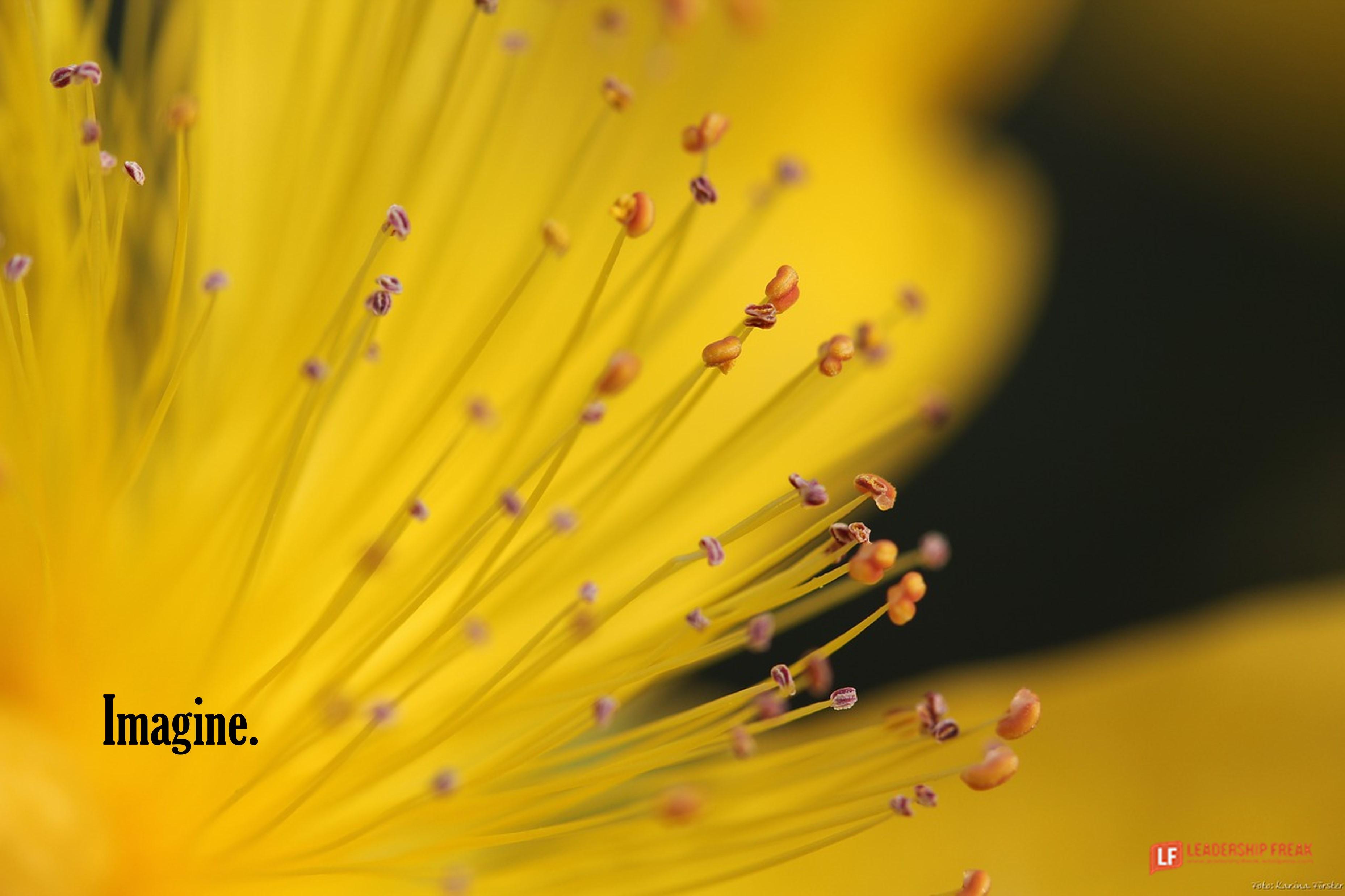 Closeup of yellow flower.  Imagine.