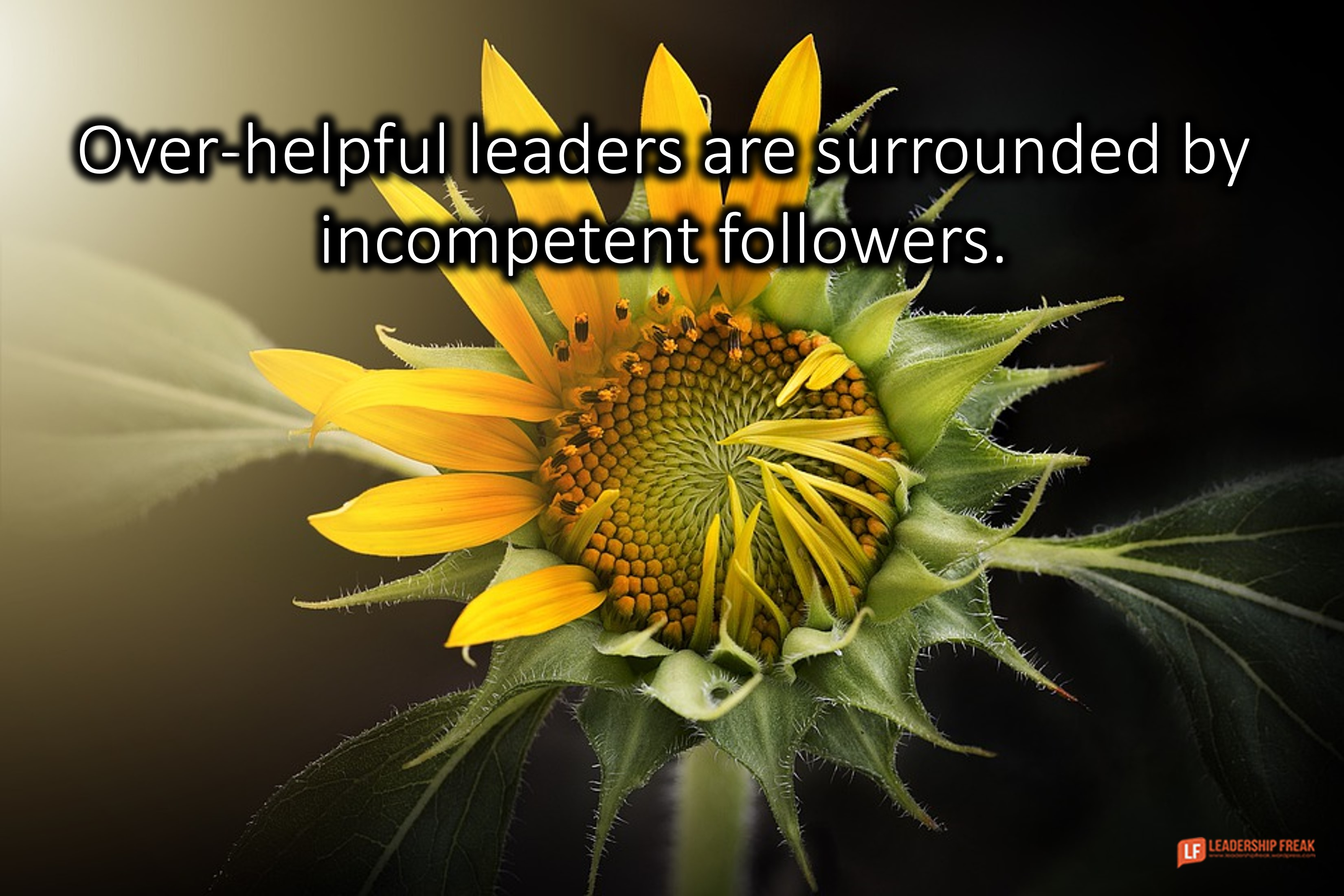 Partially wilted sunflower.  Over-helpful leaders are surrounded by incompetent followers.